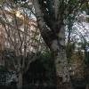 Un piso de lujo en el Turó Park con el sello de calidad del arquitecto Mitjans