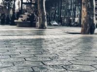 Los 'panots' de Barcelona