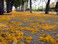 Vive el otoño en la parte alta de Barcelona